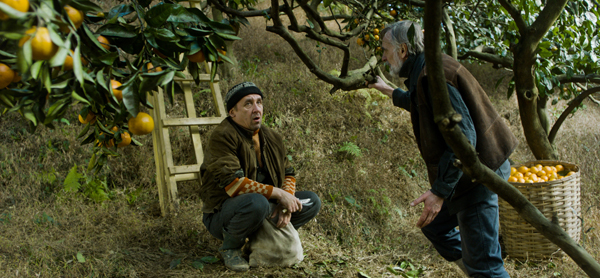 """War comes to the doorstep of two Estonian immigrant farmers in the internationally acclaimed drama """"Tangerines."""" Via Samuel Goldwyn."""